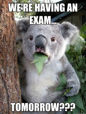 funny-koala-eat-meme-exam